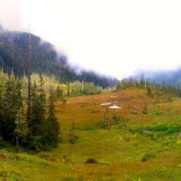 Juneau Wetland Management Plan Update