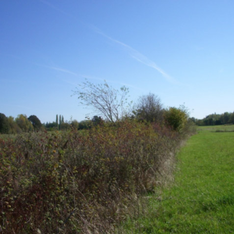 Remy Farm Consolidated Wetland Mitigation Site