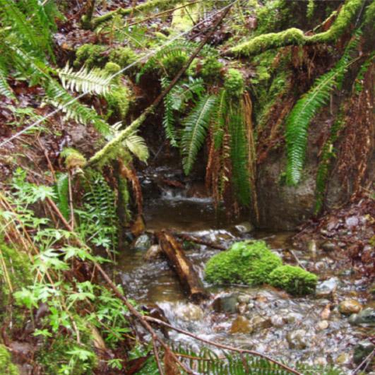 Stream Surveying